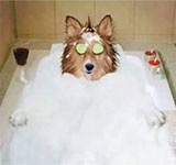The Pampered Pooch!